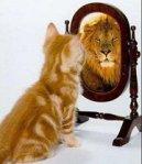 SeeLionin Mirror